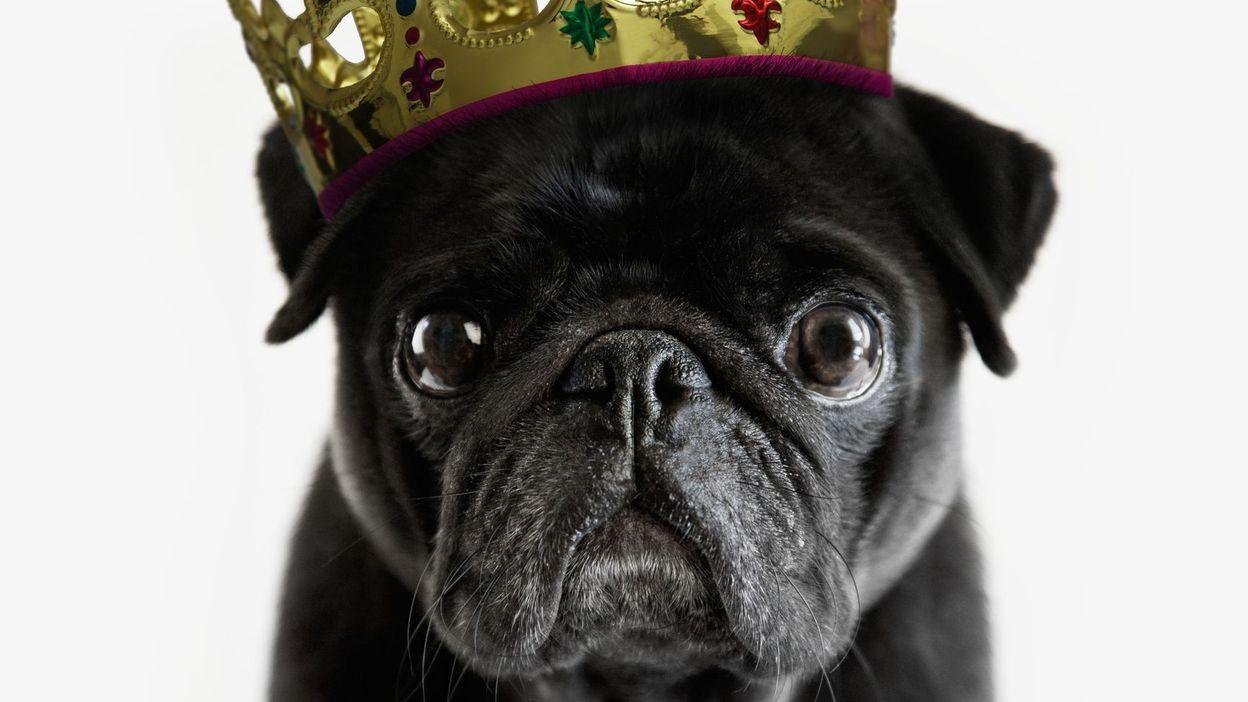 C'est l'histoire d'un animal : Les chiens des femmes et des hommes de pouvoir