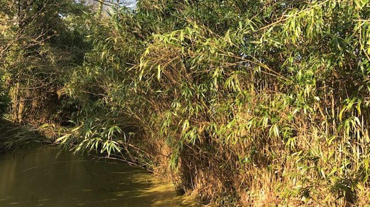 Se Cacher Des Voisins Dans Son Jardin de si jolis bambousqui sèment la zizanie entre voisins!