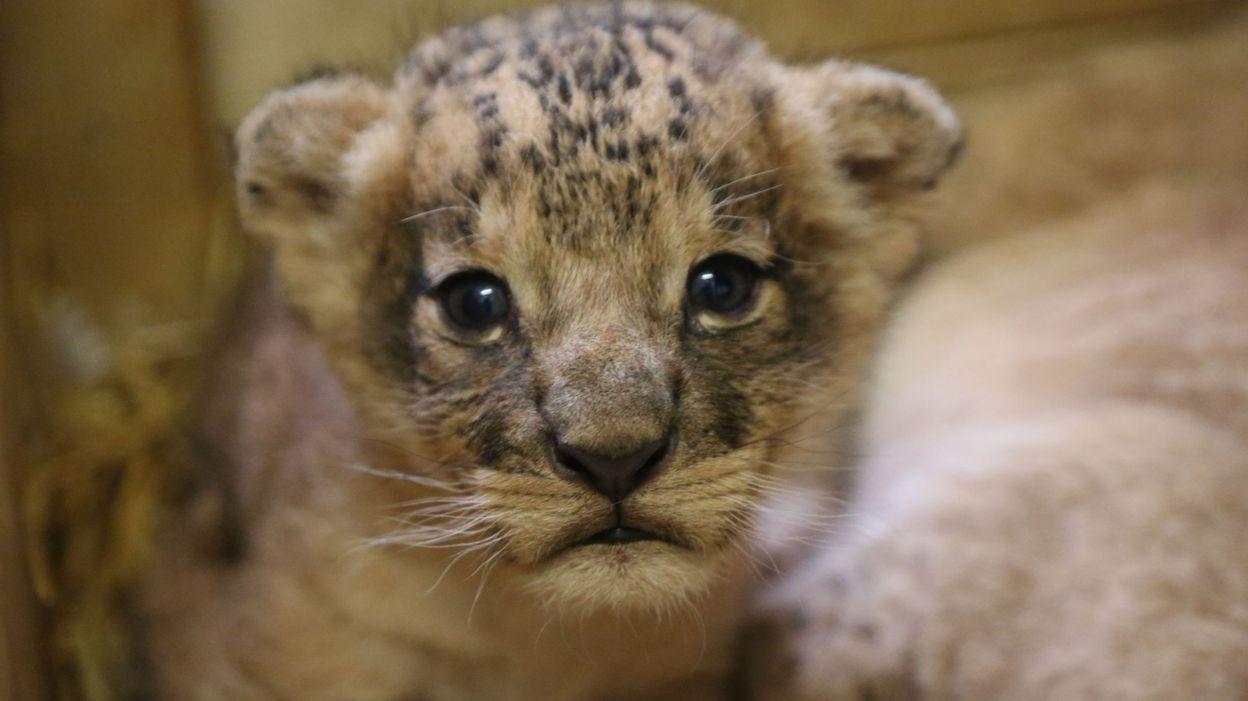 Concours de l 39 animal le plus mignon du monde des photos - Animal mignon ...