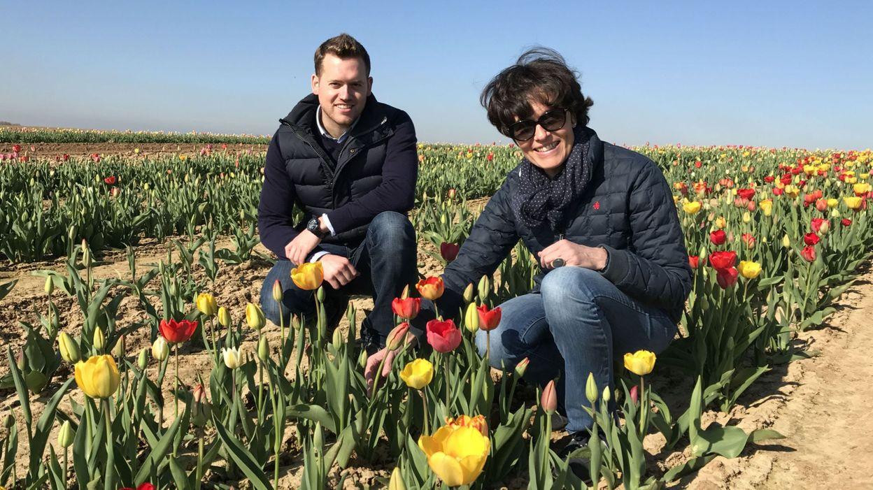 Narcisses et tulipes perte de vue dans les champs de fleurs couper - Quand couper les tulipes fanees ...