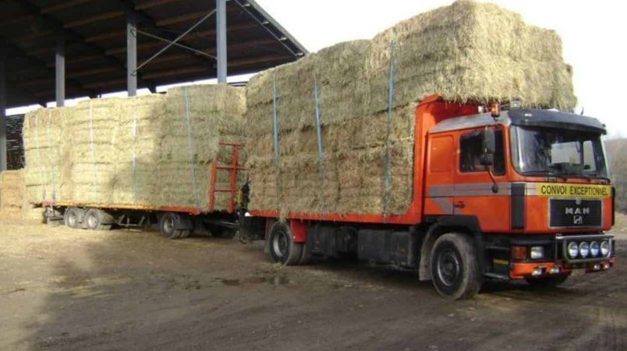 La canicule chez les bovins et les chevaux  la paille vient à manquer et  les prix montent 9cfcd6730ef