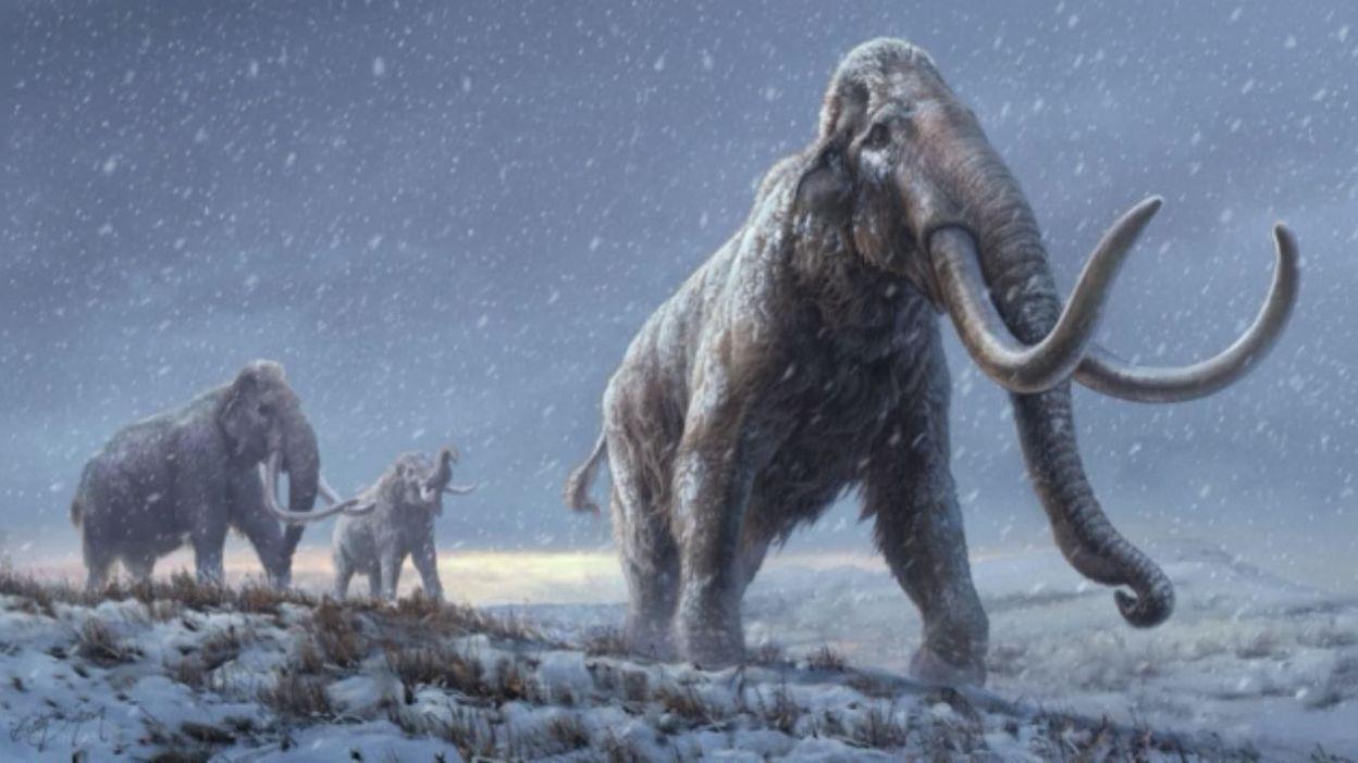 Info Les scientifiques font parler L'ADN des mammouths un million d'années plus tard - RTBF