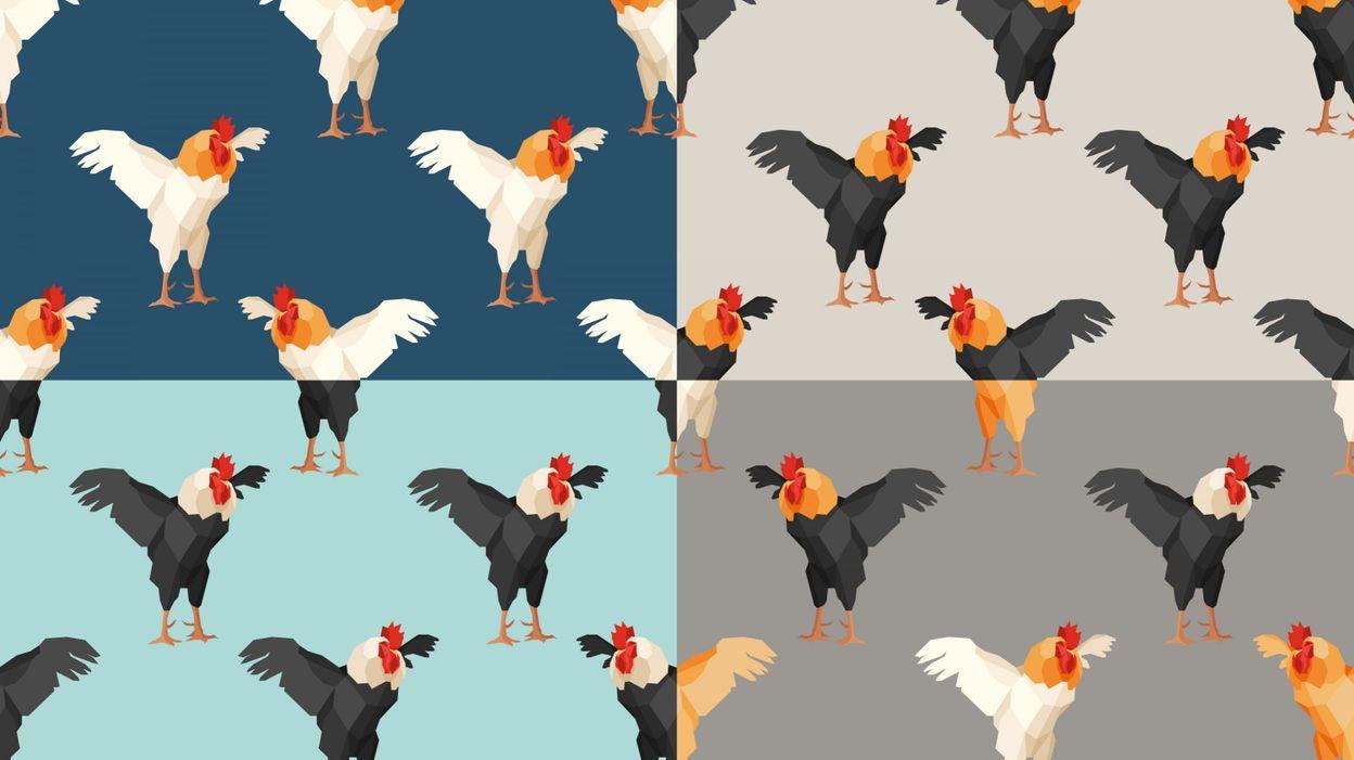 Mettre Des Poules Dans Son Jardin poules urbaines : mode d'emploi