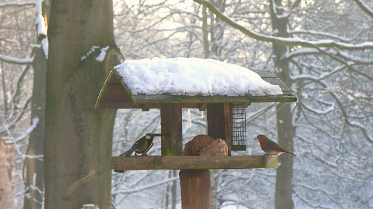 Nourrir les oiseaux de nos jardins en hiver des graines - Plan de mangeoire pour oiseaux du jardin ...