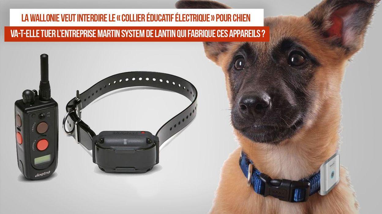 interdiction du collier lectrique pour chien quelles cons quences pour le leader mondial belge. Black Bedroom Furniture Sets. Home Design Ideas