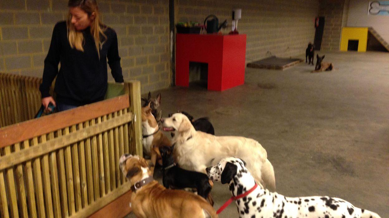 Braine-l'Alleud: la crèche pour chiens