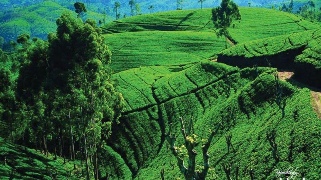 La Meilleure Destination Touristique Asiatique De 2017? Le Sri Lanka