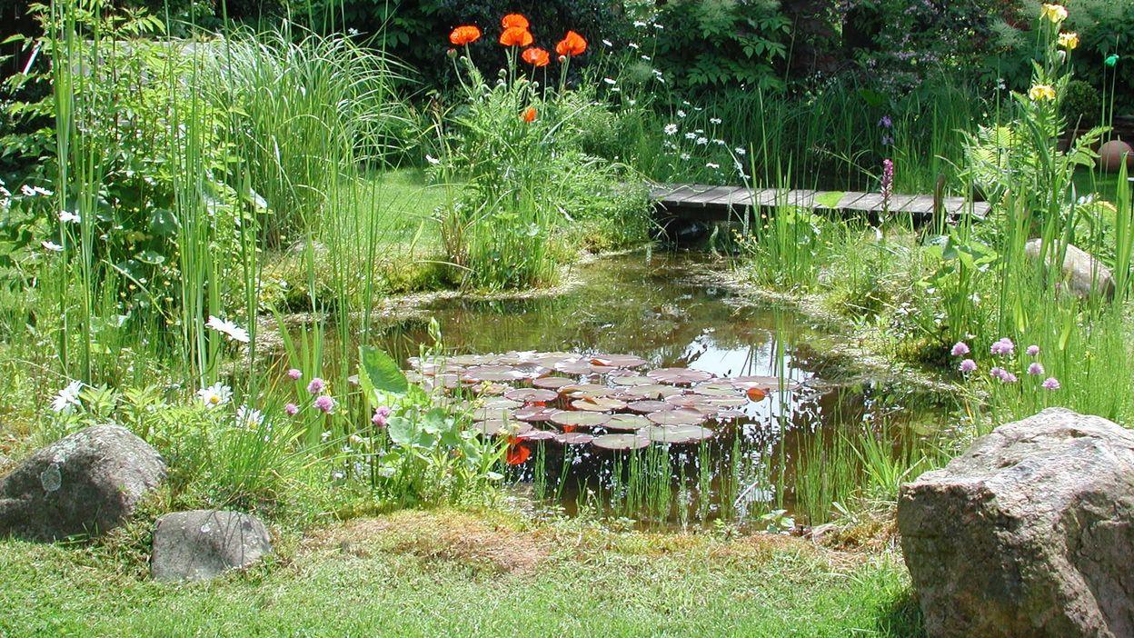 100 Incroyable Suggestions Une Mare Naturelle Dans Votre Jardin