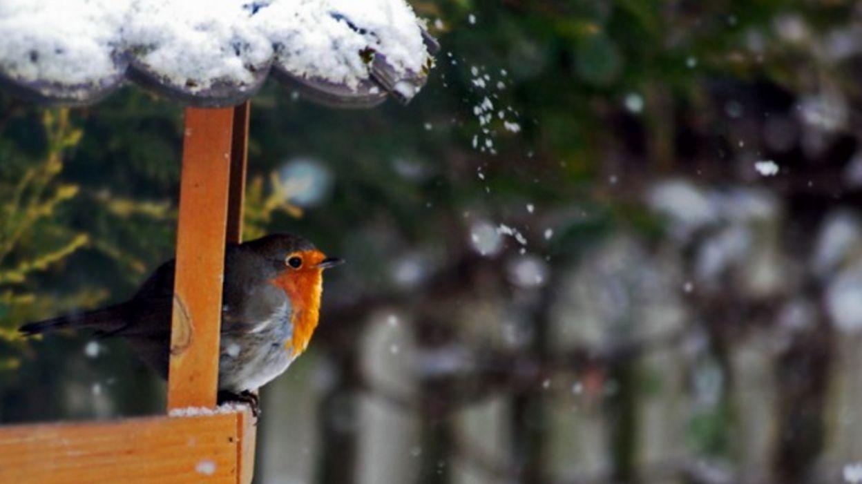 Nourrir les oiseaux de nos jardins en hiver... des graines de plaisir ! 35539eee04c4