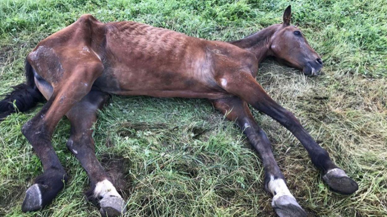 Tournai: un marchand de chevaux d'Ogy et un inspecteur vétérinaire renvoyés en Correctionnelle
