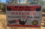Le business du Rhino à voir dans Doc Shot