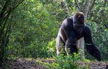 Le Gabon, leader de la biodiversité ?