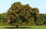Bois du Rond-chêne. PHOTO / foggie