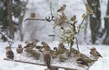 Recensement des oiseaux : les résultats