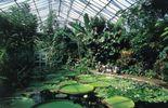 Serre du jardin botanique d'Edimbourg