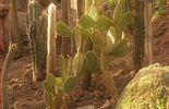 collection de cactus - observatoire du monde des plantes- ULG