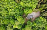 Une boucle 78 km et 3 bivouacs dans la Grande Forêt de Saint-Hubert PHOTO / www.trekkingetvoyage.com