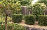 Le jardin est structuré sans être sévère