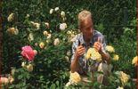 Guy parmi ses roses