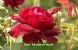La fleur résiste bien aux pluies et au soleil