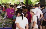 A Singapour, Hortpark, le lieu privilégié pour découvrir le jardinage