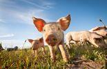 On a déniché des anecdotes incroyables sur les animaux-acteurs!