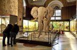 AfricaMuseum, un musée à visiter en famille!