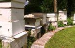 L'apiculture : la passion de Michel