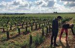 Questions à la Une : Le vin wallon