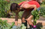 La récolte des graines chez Valérie Mostert