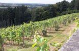 Le Vignoble est planté au cœur d'un domaine d'une très grande beauté.