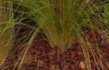 Couche de gravier de lave qui empêche le développement des herbes indésirables