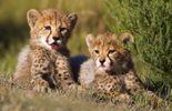 Voici notre top 5 des bébés animaux les plus mignons