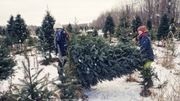 Daughters carrying freshly cut Christmas tree outdoors winter.