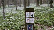 Sécurité: Circuler en Forêt