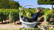 Beaujolais: et si l'on dégustait aussi les autres vins nouveaux?