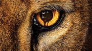"""Les animaux se déchaînent dans """"Zoo"""", nouvelle série estivale de CBS"""