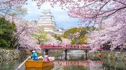 Une application pour ne pas manquer les cerisiers en fleurs au Japon