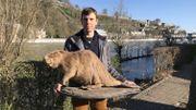 Stéphane Abras tient dans ses mains Hector, le castor du contrat de rivière de la Haute Meuse. Un jeune qui avait été trouvé mort. Adulte, un castor pèse entre 18 et 30 kilos et mesure 90 cm