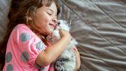 Les chats aiment leurs maîtres comme des parents