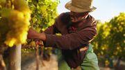 L'Italie, premier producteur mondial de vin, donne le coup d'envoi de ses vendanges