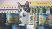 Des chats font leurs courses et se comportent comme des humains dans une pub qui fait le buzz