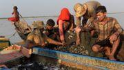 Au Cambodge, les touristes remplacent les poissons sur le lac Tonlé Sap