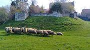 Haneffe: découvrez les produits fermiers d'exception de la Ferme Schalembourg