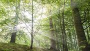 De la douceur en plein cœur de la Forêt de Soignes!