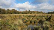 La friche Josaphat à Schaerbeek, un joyau écologique à sauvegarder