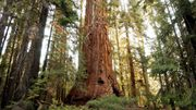 Wood Wide Web, une belle découverte!