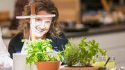 Cultiver des plantes aphrodisiaques chez soi