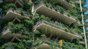 Loi de la jungle : des immeubles en Chine envahis par les plantes