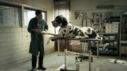 """Cannes: le casting canin de """"Dogman"""" récompensé par la Palm Dog"""